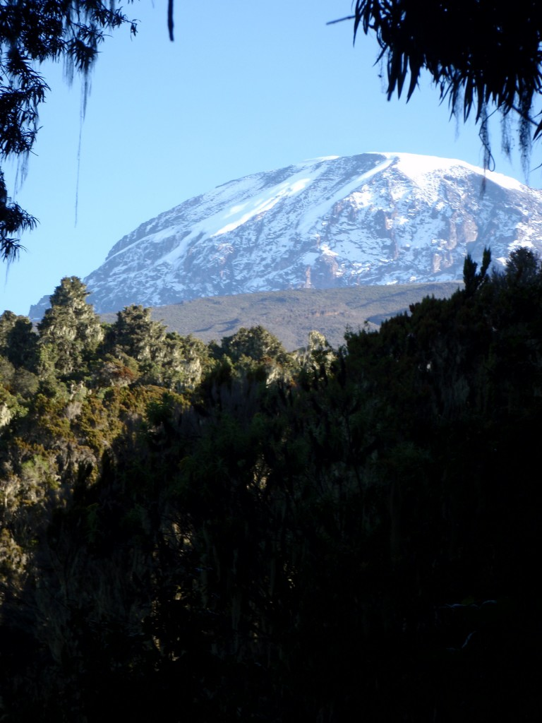 One of the last views of Kilimanjaro's summit from the trail.  It's good to be back in the trees!