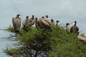The vultures are waiting...