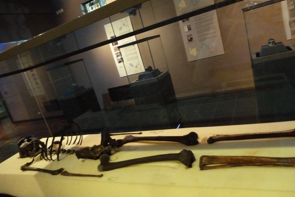Homo erectus - Turkana Boy