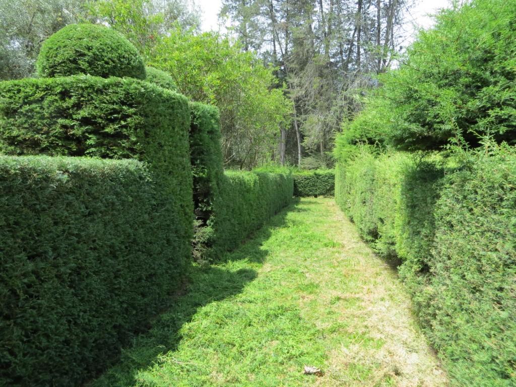 The maze in the botanical garden.