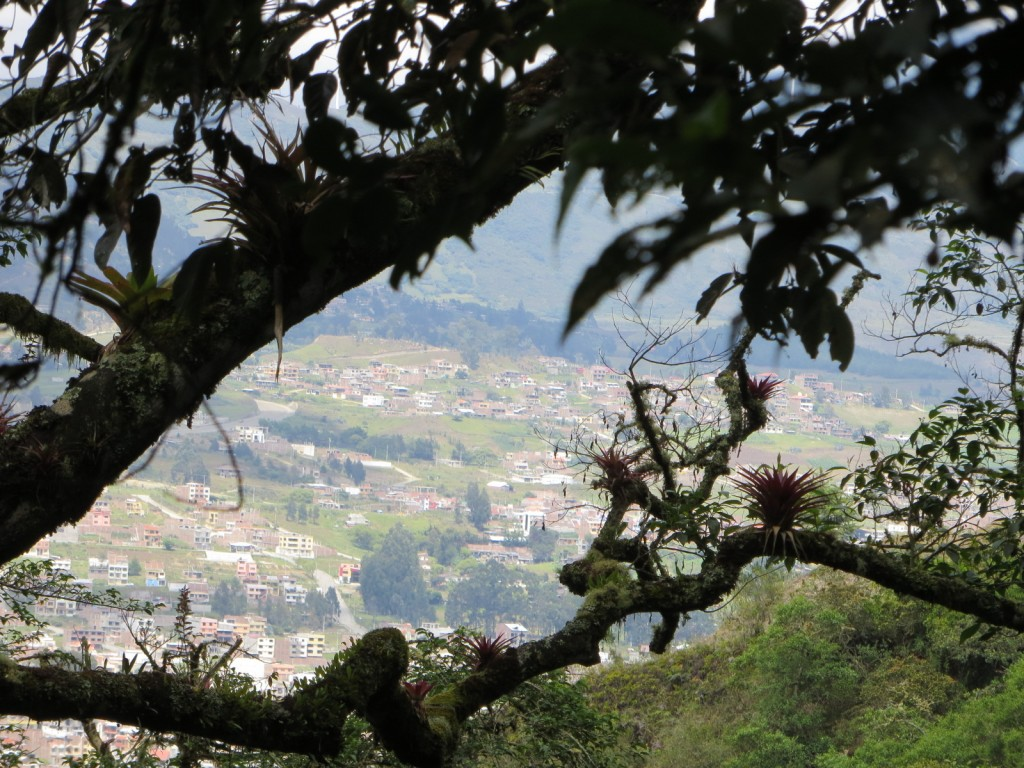 Loja, viewed through the jungle.