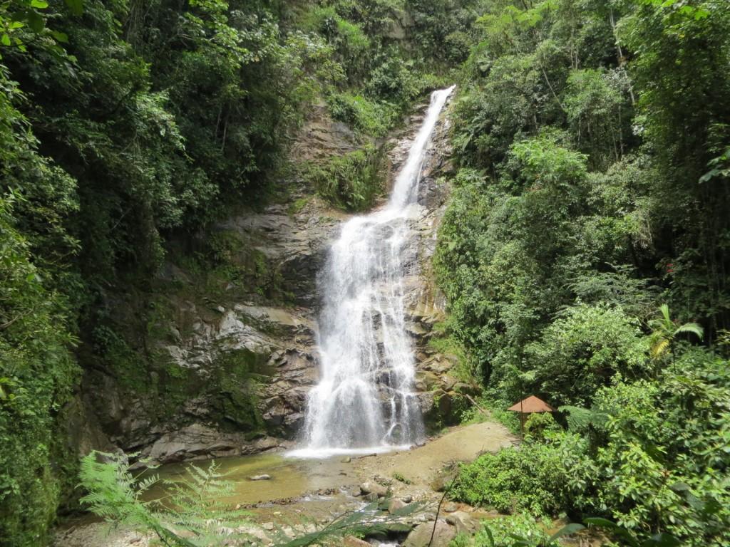 Podocarpus Waterfall Zamora