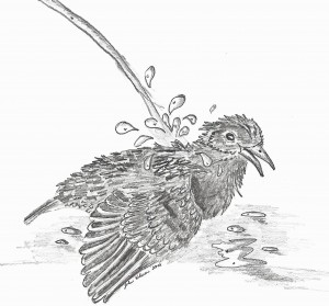 Stella, bathing in the drinking fountain. Drawing by John Kilmer.