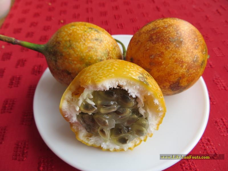 granadilla, passionfruit