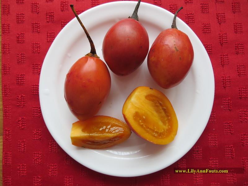 tomate dulce tomate de arbol tamarillo