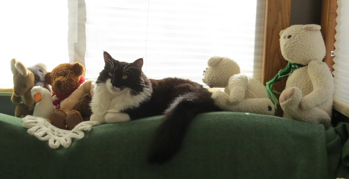 Sprite tries to blend in with the stuffed animals. Fort Collins, CO.
