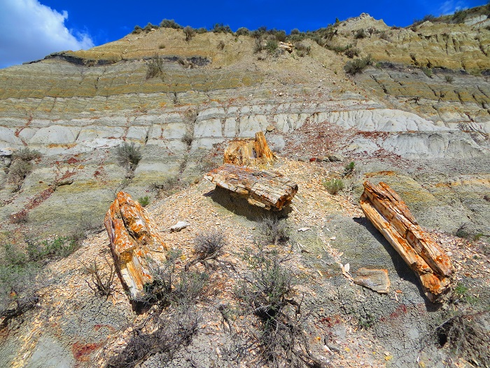 A petrified tree in Theodore Roosevelt National Park.